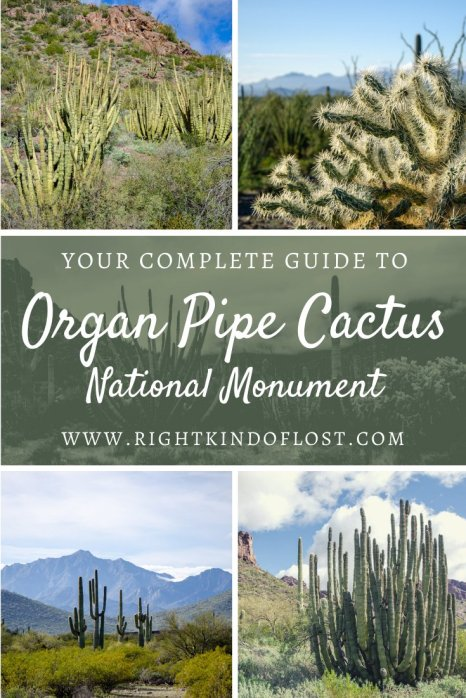 After just a few minutes at Organ Pipe Cactus National Monument, I knew it was going to be one of my favorite places. It is such a special place.