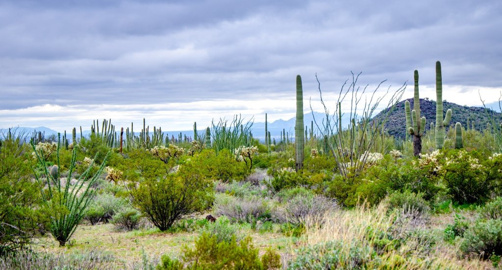 Organ Pipe National Monument is shown