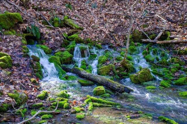 The Springs at Smith Creek Preserve