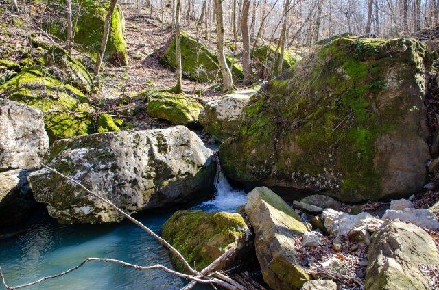 Exploring Smith Creek Preserve