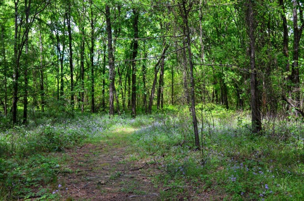 Hiking at DeGray Lake State Park