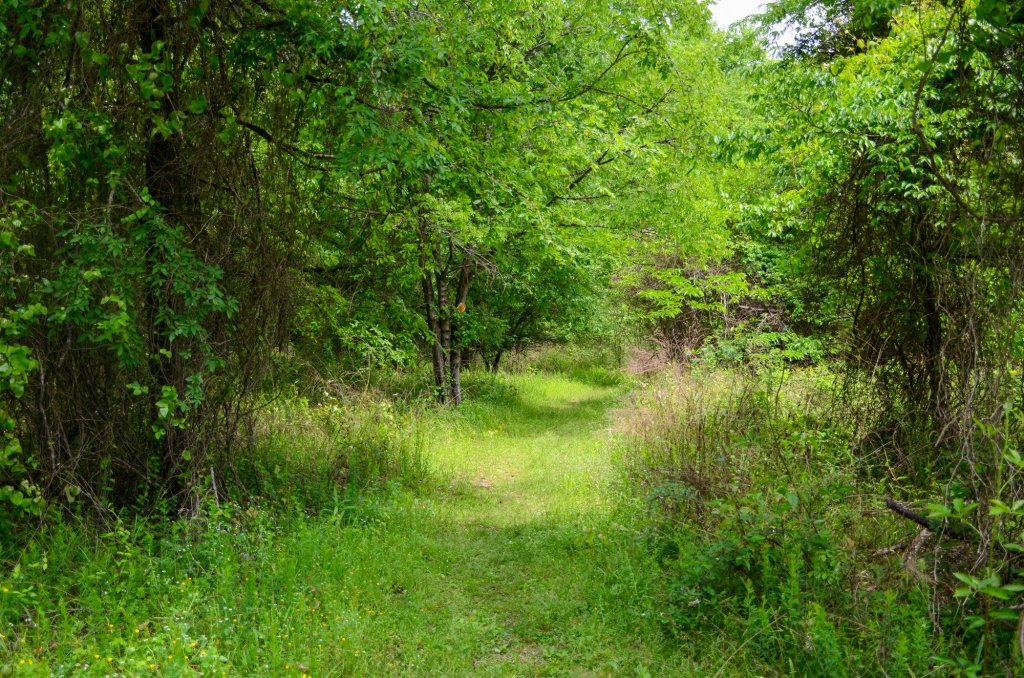 Super green grass is shown Green Heron Trail while hiking at DeGray Lake State Park