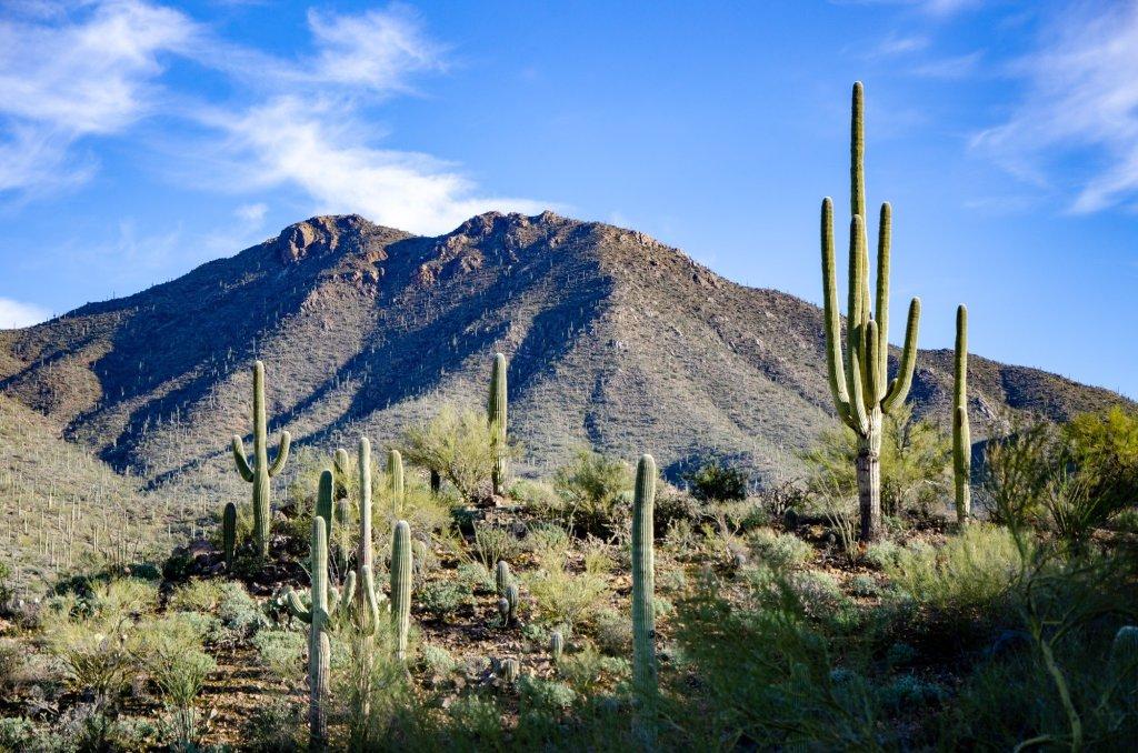 Wasson Peak is shown