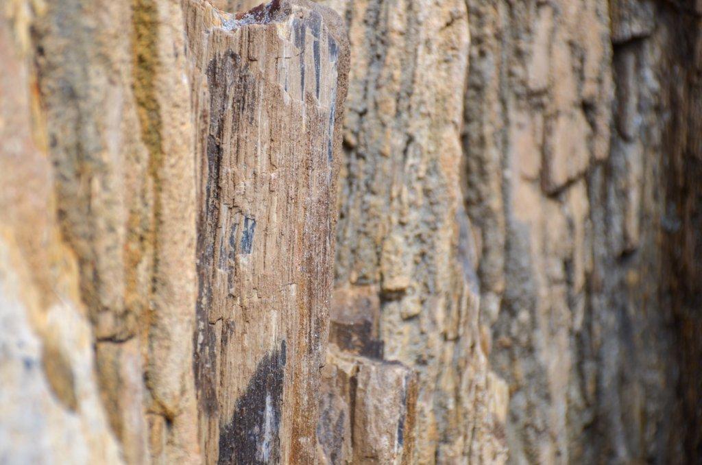 A closeup of a petrified log is shown
