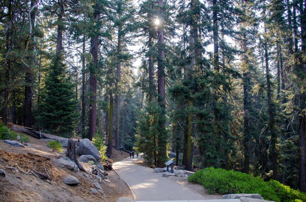 The Congress Trail is shown at Sequoia National Park