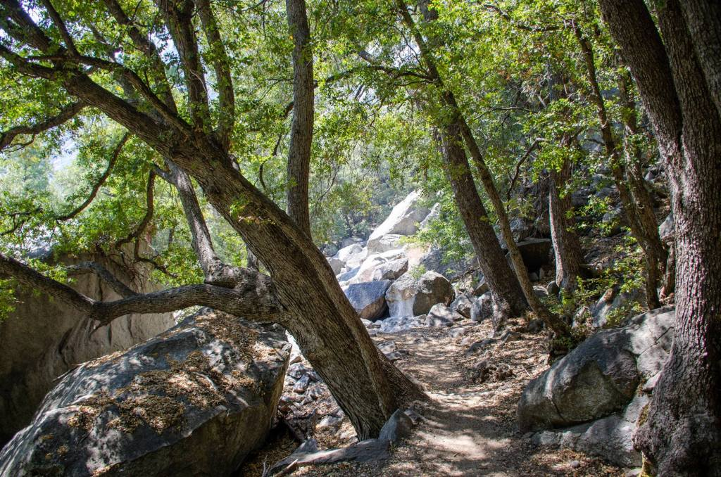 The trail to Mist Falls at Kings Canyon National Park is shown