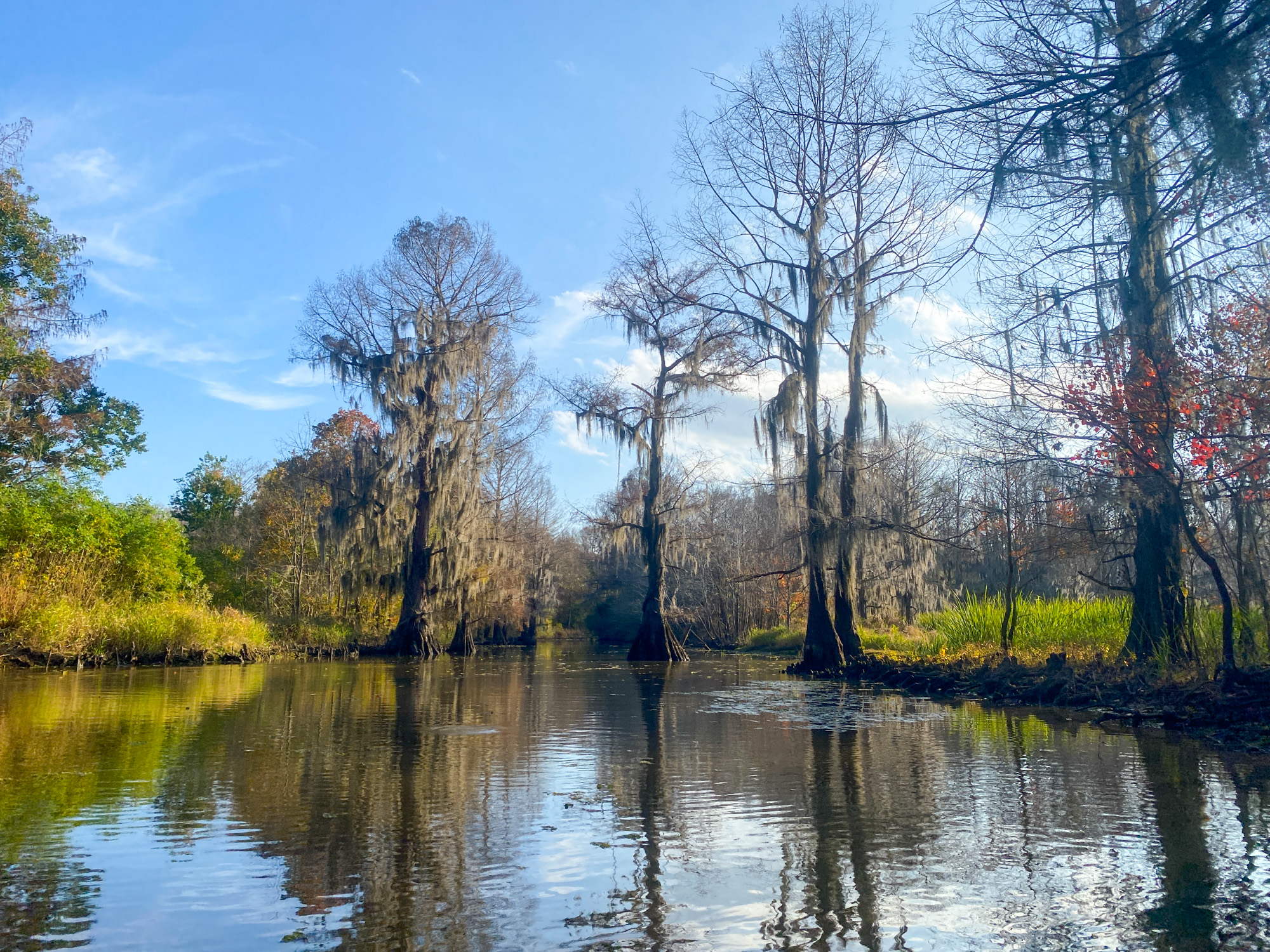 Cypress Trees are shown on Hell's Half Acre Paddling Trail