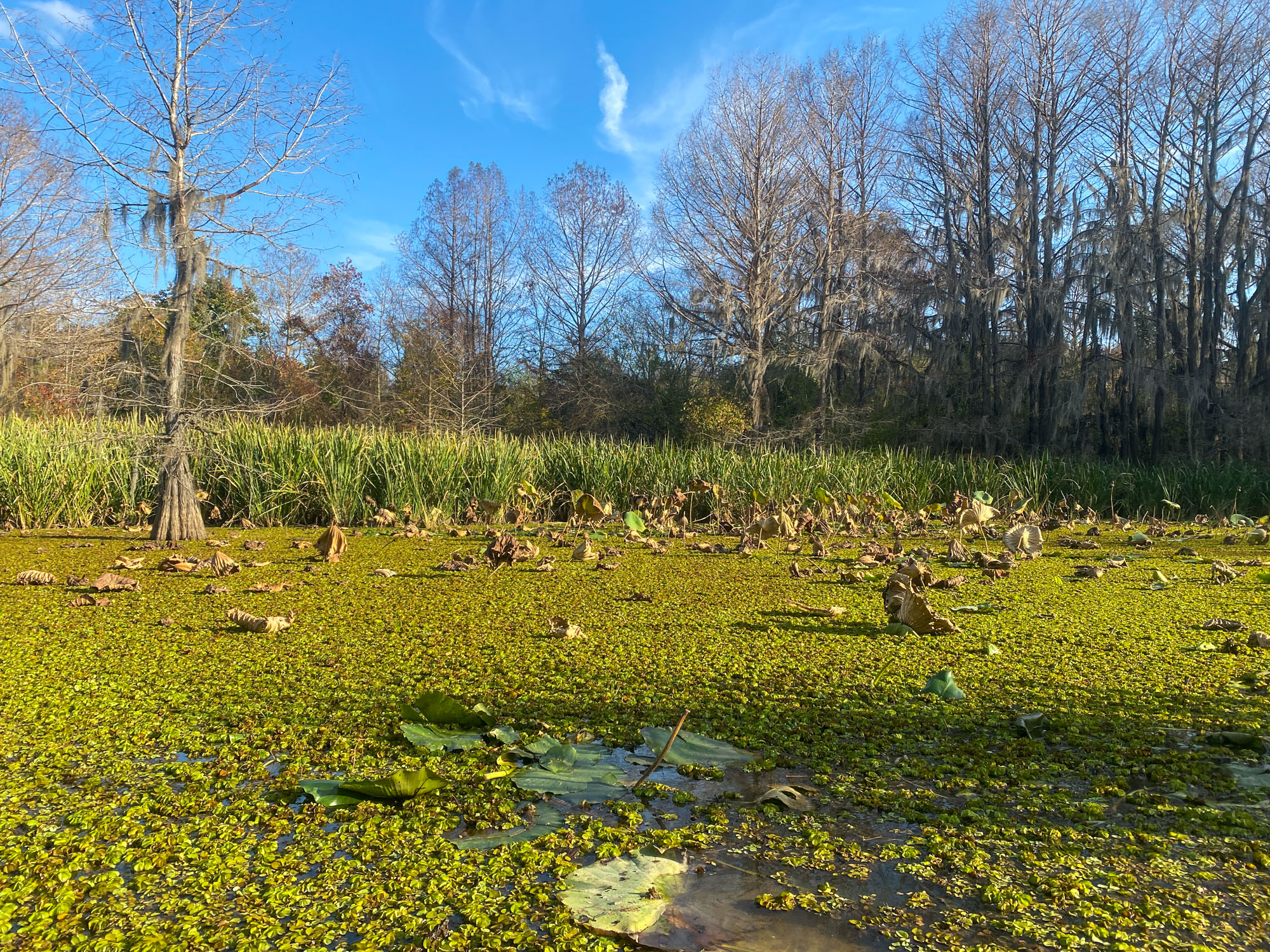 A swamp is shown on Caddo Lake