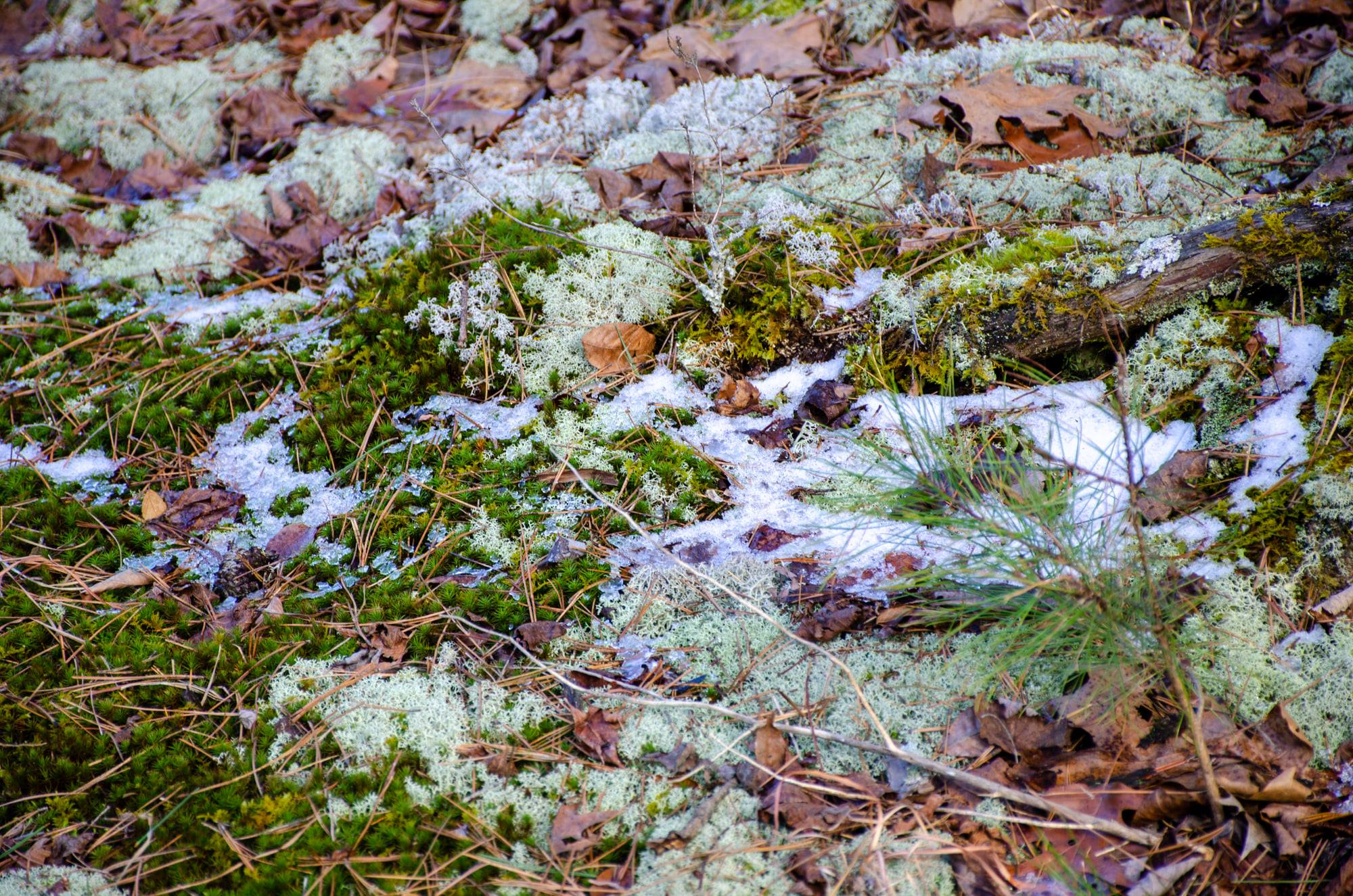 snow peaks out from moss
