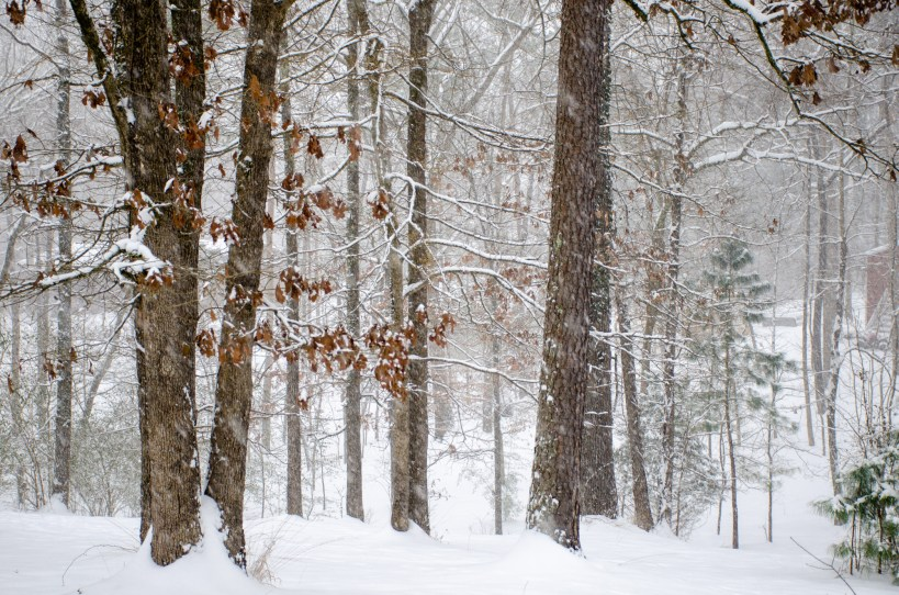 snow falls in a wooded area
