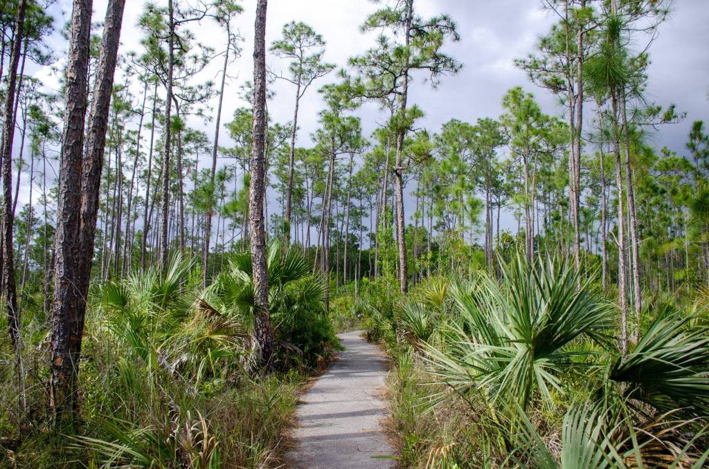 The Pinelands Trail is shown at Everglades National Park
