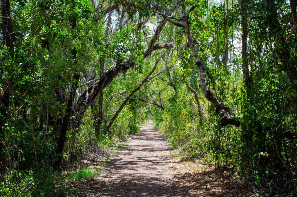 A tunnel of trees is shown on the Snake Bight Trail
