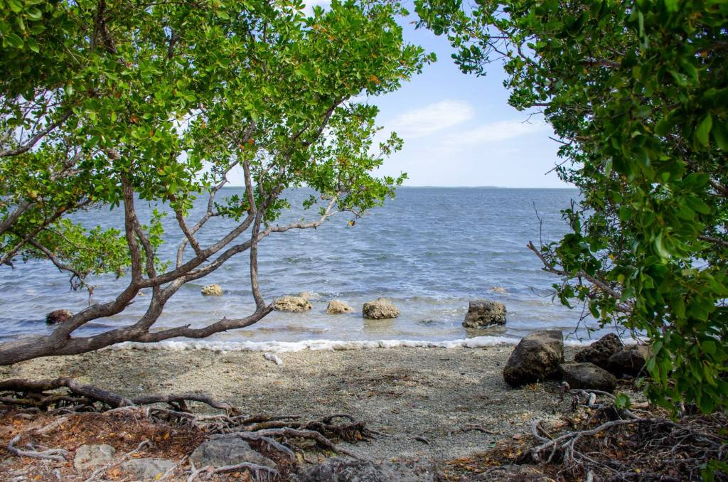 The ocean is shown throught the trees at Biscayne National Park