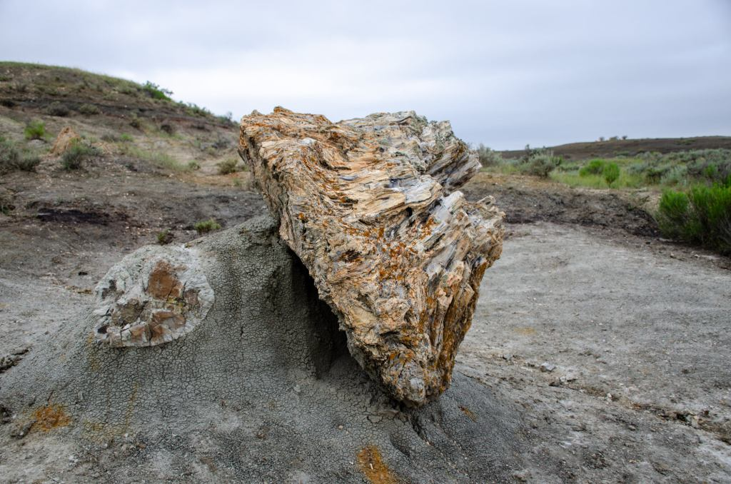 A petrified log is shown at Theodore Roosevelt National Park