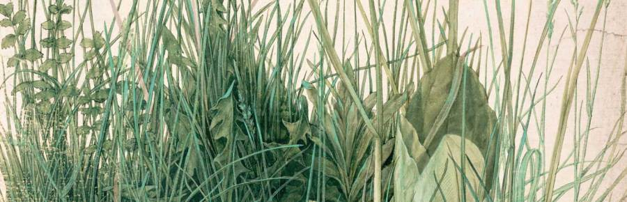 The Great Piece of Turf (detail), 1503, by Albrecht Dürer.Nuremberg, watercolor on paper. Albertina Museum, Vienna.