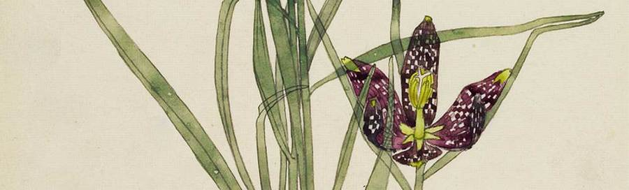 """Fritillaria"" (detail), 1915, by Charles Rennie Mackintosh"