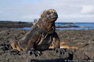 Galapagos (photo by Burrard-Lucas.com)