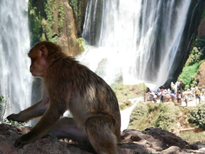 Wasserfälle, Affen, Menschen - Natur und Kommerz.