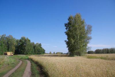 Übernachtungsplatz am Rande eines kilometerlangen Getreidefeldes