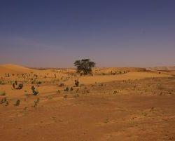 0490_Baum Atar-Tidjikja