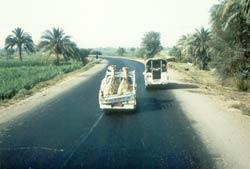 10-Kameltransport