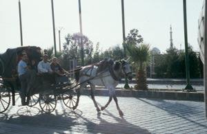"""""""Fiaker"""" in Bosra - Fuhr- und Transportmittel nicht nur für Touristen"""