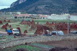Weiden-Anbaugebiet