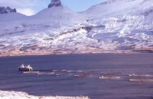 Im Fjord: Ein moderner Lachszuchtbetrieb