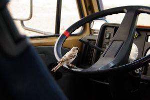 Hast Du überhaupt einen Führerschein?