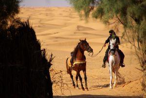 Arabische Pferdeerziehung
