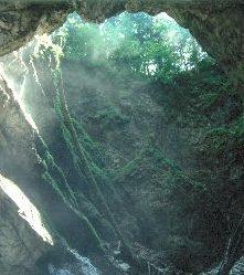 Blick vom Grund der Eishöhle mit abgestorbenen 30m hohen Bäumen