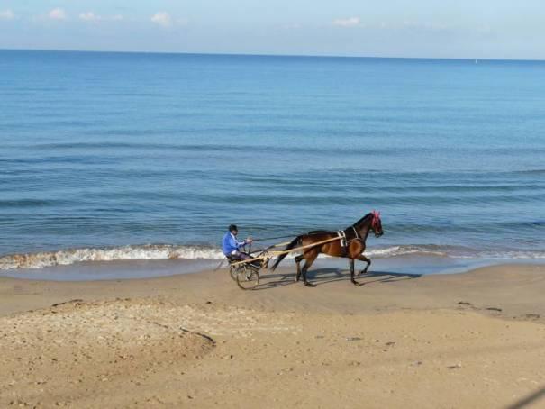 Sulky-Fahrer am Strand