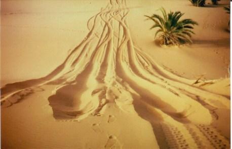 sind die Dünenquerungen nicht ganz einfach.