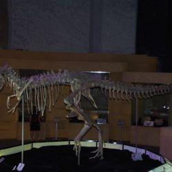 0023080_UB_Dino_Museum_T-Bataar