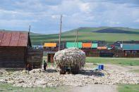 Schafschur - Straßensperre in Tsagaan Uul...
