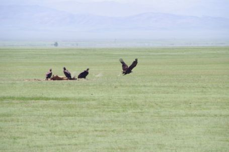Adlerparty am Rande der Piste zum UVS-Nuur