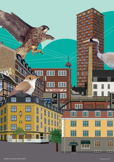Fuglekvarteret collage 1 - falk, Nordbro