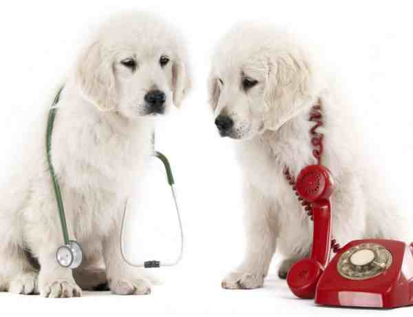 dogs_calling_vet_phone_puppies_fotolia_39571902_1_