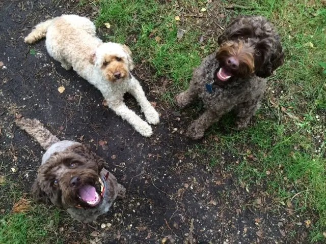 Happy smiling faces on the walk with Ringwood Dogs
