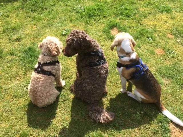 Scent Training Dogs Dorset
