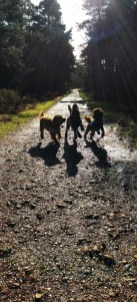 shadow dogs