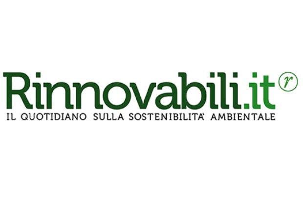 bioplastica da limoni