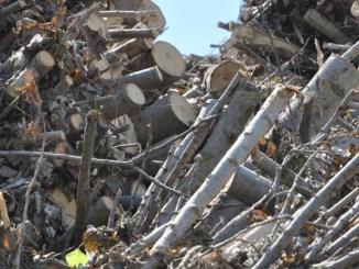 Il Comitato Energia da Biomasse Solide diventa Associazione