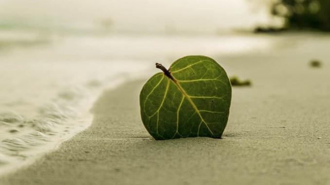 Anea Green Days, si parla di energia, ecologia e sostenibilità