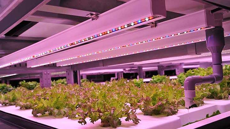 LED per ortaggi e vertical farming, le soluzioni Signify