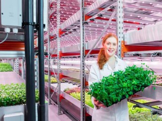LED per ortaggi e vertical farming