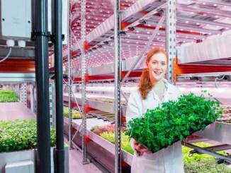 LED per ortaggi e vertical farming