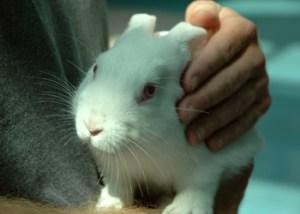 rabbit_day_photo2