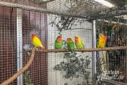 Farbenfroh und stimmgewaltig: 600 Tiere bei Weserberglandschau der Vogelfreunde Schaumburg