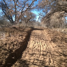 Photo of Albuquerque bosque with city-bulldozed trail
